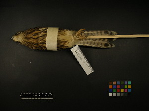 ( - 1999-0297)  @12 [ ] Copyright (2013) Takema  Saitoh Yamashina Institute for Ornithology