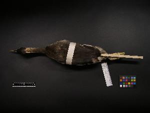 ( - 2002-0124)  @11 [ ] Copyright (2013) Takema  Saitoh Yamashina Institute for Ornithology