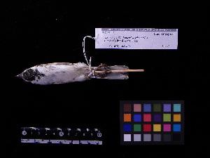 ( - 2002-0198)  @14 [ ] Copyright (2013) Takema  Saitoh Yamashina Institute for Ornithology