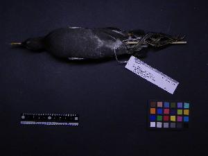 ( - 2003-0228)  @12 [ ] Copyright (2013) Takema  Saitoh Yamashina Institute for Ornithology