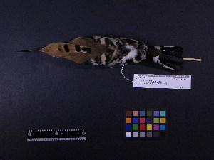 ( - 2006-5295)  @11 [ ] Copyright (2013) Takema  Saitoh Yamashina Institute for Ornithology