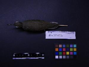 ( - 2002-0017)  @12 [ ] Copyright (2013) Takema  Saitoh Yamashina Institute for Ornithology