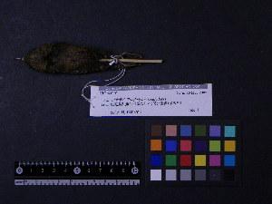 ( - 2007-1092)  @12 [ ] Copyright (2013) Takema  Saitoh Yamashina Institute for Ornithology