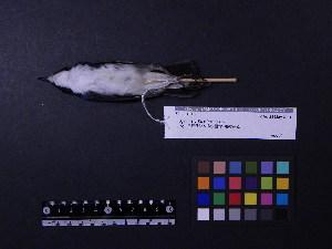 ( - 2009-0177)  @12 [ ] Copyright (2013) Takema  Saitoh Yamashina Institute for Ornithology