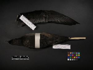 ( - 2005-0131)  @11 [ ] Copyright (2015) Takema  Saitoh Yamashina Institute for Ornithology