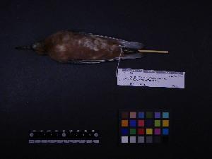 ( - 2009-0378)  @11 [ ] Copyright (2015) Takema  Saitoh Yamashina Institute for Ornithology