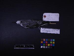 ( - 2009-0836)  @11 [ ] Copyright (2015) Takema Saitoh Yamashina Institute for Ornithology