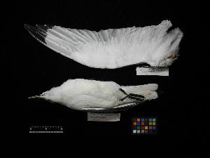 ( - 2012-0712)  @11 [ ] Copyright (2015) Takema Saitoh Yamashina Institute for Ornithology