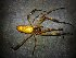 (Nephila clavipes - AASFB-0412)  @14 [ ] Unspecified (default): All Rights Reserved  Manuel Medina Mex Unspecified