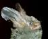 (Megaderma - ZMMU SVK 11-006)  @14 [ ] Copyright (2011) Sergei Kruskop Zoological Museum of Moscow University