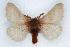 (Hemileuca oliviae - CSU-CPG-LEP002198)  @13 [ ] Copyright (2009) Unspecified Colorado State University