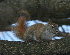  (Sciuridae - HBL008448)  @14 [ ] CreativeCommons - Attribution Non-Commercial Share-Alike (2010) Unspecified Biodiversity Institute of Ontario