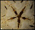 (Ophioderma - ACAP107)  @13 [ ] Unspecified (default): All Rights Reserved  Unspecified Unspecified