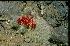 (Cochemiea pondii - GE02231.6)  @11 [ ] Copyright  Salvador Arias Unspecified
