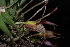  (Masdevallia - GE02294.6)  @11 [ ] Copyright  Gerardo Salazar, 2010 Unspecified