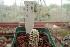 (Mammillaria theresae - GE02468)  @11 [ ] Copyright  Salvador Arias Unspecified