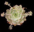  (Sedum suaveolens - GE02398)  @11 [ ] Copyright (2010) J. Reyes 2031 Unspecified