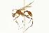 (Aphaenogaster MAS001 - 08COSTA-0141)  @14 [ ] Unspecified (default): All Rights Reserved  Unspecified Unspecified