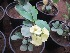 (Euphorbia rossii - B286.1)  @11 [ ] C (2014) PHCDBS Pual Hebert Centre For DNA Barcoding AND Biodiversity Studies