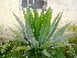 (Cactus - OP54)  @11 [ ] Unspecified (default): All Rights Reserved  Unspecified Unspecified