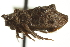 (Myerslopiidae - CNC#HEM402210)  @11 [ ] CreativeCommons - Attribution Non-Commercial Share-Alike (2012) BIO Photography Group Biodiversity Institute of Ontario