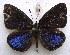 (Lipteninae - MLIB-1528)  @14 [ ] CreativeCommons - Attribution Non-Commercial Share-Alike (2014) Michel Libert BIO Photography Group