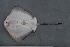 ( - BPS-0655)  @11 [ ] Copyright (2007) Samuel P. Iglesias Museum national d'Histoire naturelle