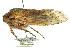 (Tettigarctidae - 11ANIC-16418)  @14 [ ] CreativeCommons - Attribution Non-Commercial Share-Alike (2011) ANIC/BIO Photography Group ANIC/Biodiversity Institute of Ontario