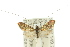 (Nemophora chrysolamprella - 10ANIC-02710)  @14 [ ] CreativeCommons - Attribution Non-Commercial Share-Alike (2010) BIO Photography Group BIO/CSIRO