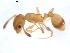 (Temnothorax nylanderi - CCDB-09562-G01)  @14 [ ] Copyright  G. Blagoev 2010 Unspecified