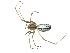 (Neriene litigiosa - BIOUG07166-H11)  @11 [ ] CreativeCommons - Attribution Non-Commercial Share-Alike (2013) G. Blagoev Biodiversity Institute of Ontario