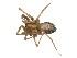 (Tegenaria - BIOUG12605-G03)  @13 [ ] CreativeCommons – Attribution Non-Commercial Share-Alike (2014) G. Blagoev Biodiversity Institute of Ontario