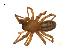 (Callobius pictus - BIOUG14290-F09)  @14 [ ] CreativeCommons – Attribution Non-Commercial Share-Alike (2014) G. Blagoev Biodiversity Institute of Ontario