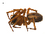( - BIOUG14290-F10)  @12 [ ] CreativeCommons – Attribution Non-Commercial Share-Alike (2014) G. Blagoev Biodiversity Institute of Ontario