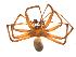 (Agelenopsis oklahoma - BIOUG14290-G10)  @11 [ ] CreativeCommons – Attribution Non-Commercial Share-Alike (2014) G. Blagoev Biodiversity Institute of Ontario