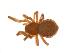 (Comaroma - BIOUG14292-D12)  @11 [ ] CreativeCommons – Attribution Non-Commercial Share-Alike (2014) G. Blagoev Biodiversity Institute of Ontario
