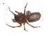 (Callobius canada - BIOUG14293-B04)  @11 [ ] CreativeCommons – Attribution Non-Commercial Share-Alike (2014) G. Blagoev Biodiversity Institute of Ontario