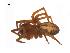 ( - BIOUG14293-F03)  @12 [ ] CreativeCommons – Attribution Non-Commercial Share-Alike (2014) G. Blagoev Biodiversity Institute of Ontario