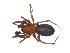(Titanoecidae - BIOUG07164-C03)  @14 [ ] CreativeCommons - Attribution Non-Commercial Share-Alike (2013) G. Blagoev Biodiversity Institute of Ontario