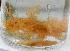 ( - BIOUG14670-F02)  @11 [ ] CreativeCommons – Attribution Non-Commercial Share-Alike (2014) Kara Layton Biodiversity Institute of Ontario