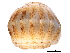 (Lepidopleurida - BIOUG14670-H03)  @11 [ ] CreativeCommons - Attribution Non-Commercial Share-Alike (2014) BIO Photography Group Biodiversity Institute of Ontario