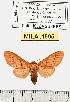 (Neidalia - MILA 1595)  @13 [ ] Unspecified (default): All Rights Reserved  Unspecified Unspecified