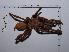 (Aphonopelma crinirufum - CCDB-11311 G01)  @14 [ ] Copyright (2012) C. Viquez Instituto Nacional de Biodiversidad