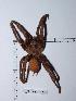 (Aphonopelma - CCDB-11311 G06)  @14 [ ] Copyright (2012) C. Viquez Instituto Nacional de Biodiversidad