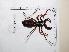 (Uropygi - CCDB-15976 B03)  @14 [ ] Copyright (2012) C. Viquez Instituto Nacional de Biodiversidad