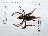 (Cyclosternum - INB0004325202)  @13 [ ] Copyright (2012) C. Viquez Instituto Nacional de Biodiversidad