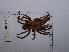 (Lasiodora - INB0004325208)  @13 [ ] Copyright (2012) C. Viquez Instituto Nacional de Biodiversidad