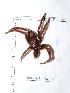 (Trichopelma - INB0004325220)  @12 [ ] Copyright (2012) C. Viquez Instituto Nacional de Biodiversidad