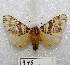 "(Isia - MACN-Bar-Lep-ct 00946)  @14 [ ] Copyright (2013) MACN Museo Argentino de Ciencias Naturales ""Bernardino Rivadavia"""