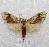 "(Tessella - MACN-Bar-Lep-ct 04469)  @15 [ ] Copyright (2013) MACN Museo Argentino de Ciencias Naturales ""Bernardino Rivadavia"""